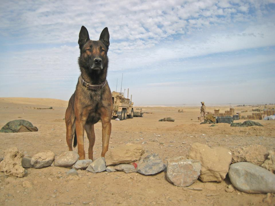 Soldier Dogs 1