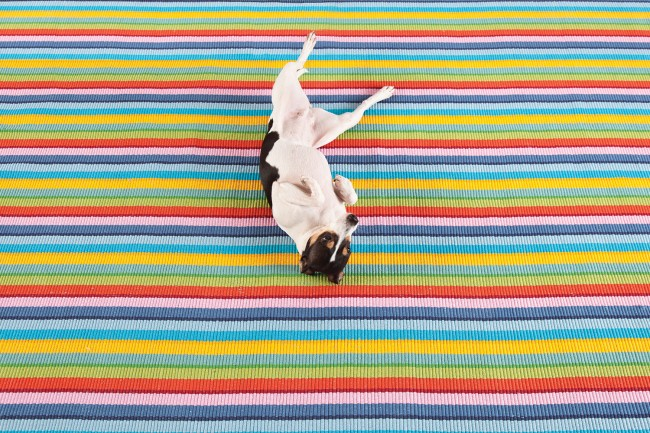 How To Pick The Perfect Pet Friendly Rug