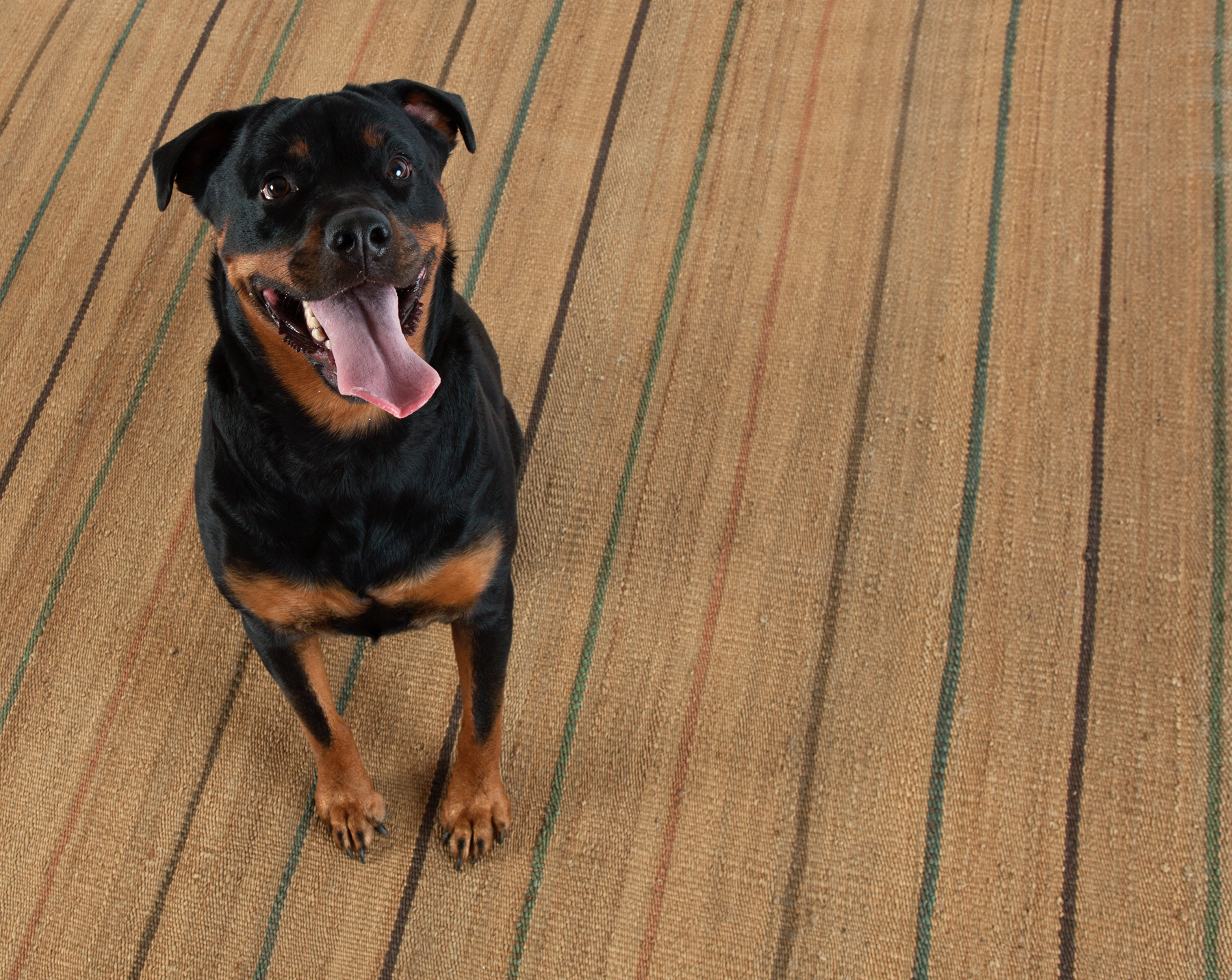 How To Pick The Perfect Pet Friendly Rug Fresh American Style
