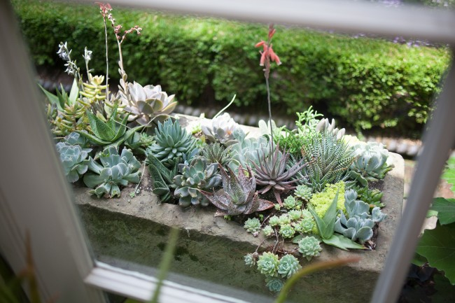 Awesome Easy Succulent Container Garden