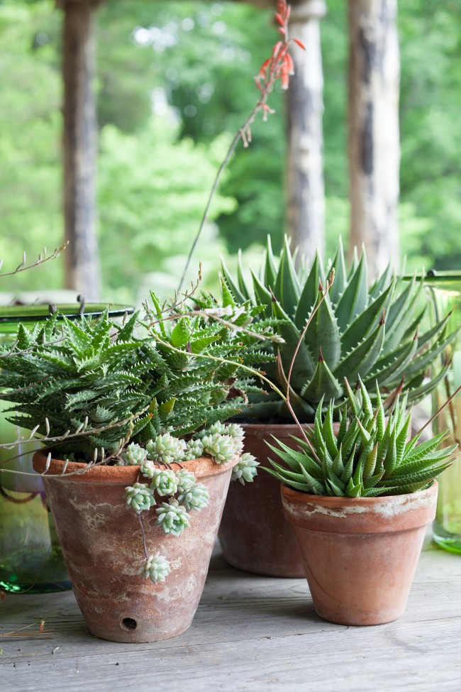 Easy succulent container garden fresh american style for Easy plants to grow in pots outside