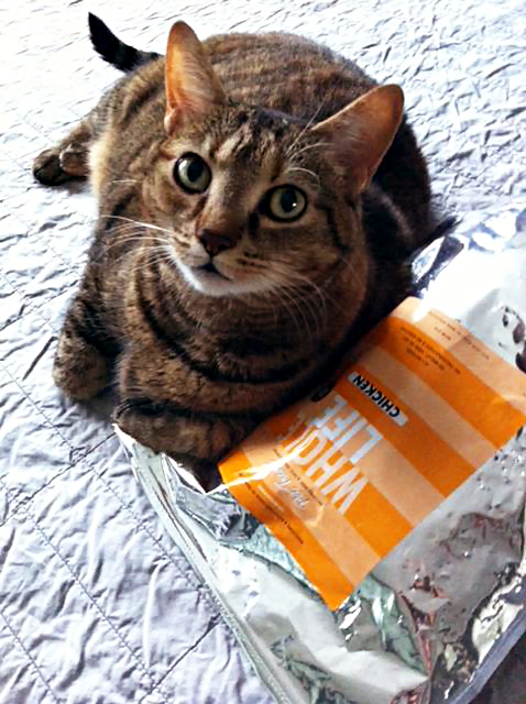 whole life pet products 4