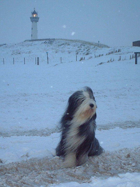 winter snow lighthouse with dog
