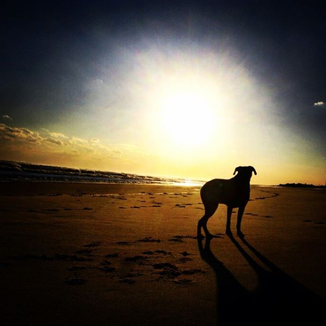 dog on beach sunset hamptons photo by Nicole Schoen Squier