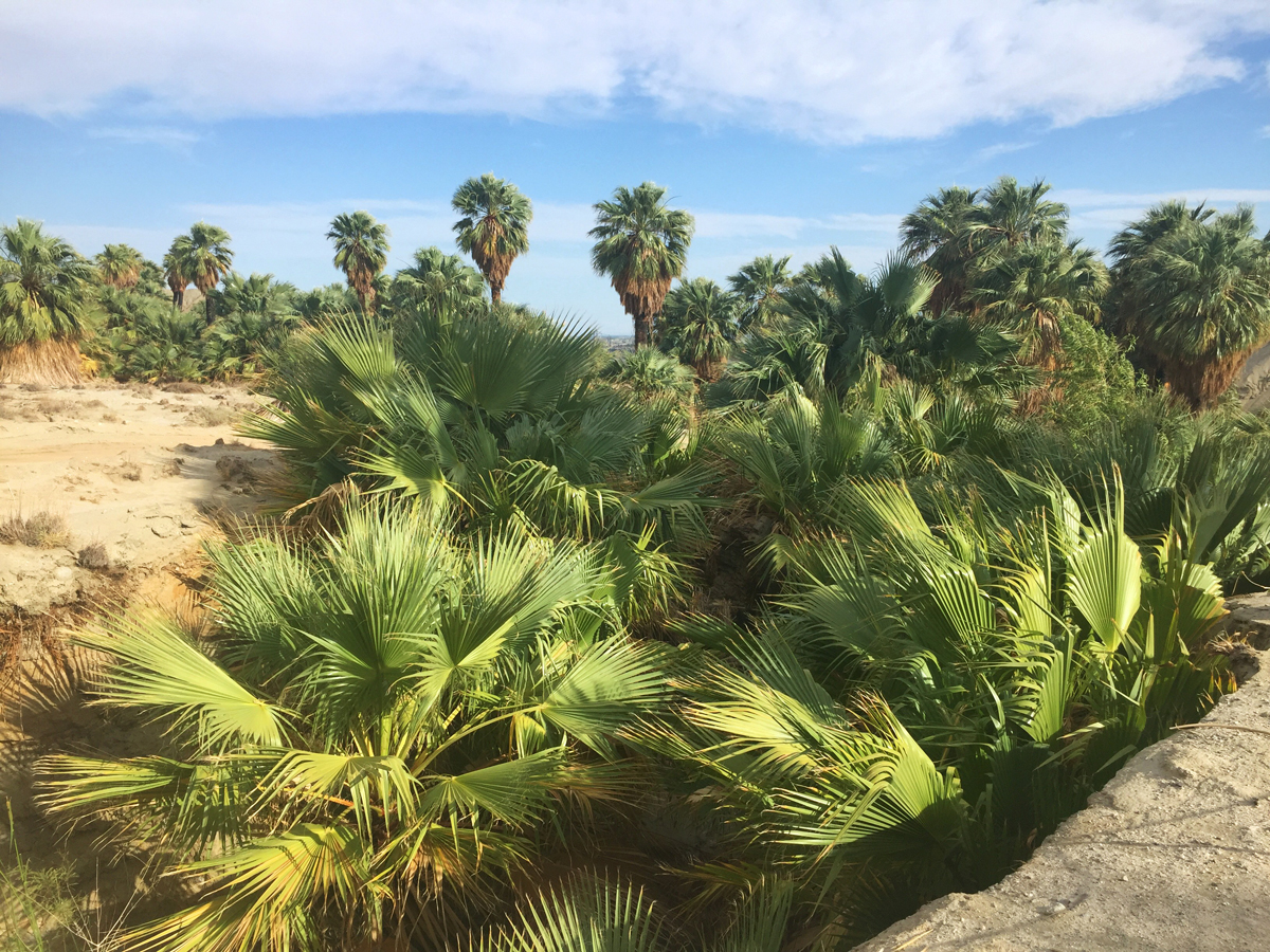 Palm tree oasis in the San Andreas Fault (photo credit: Camron Carrier) | Fresh American Style
