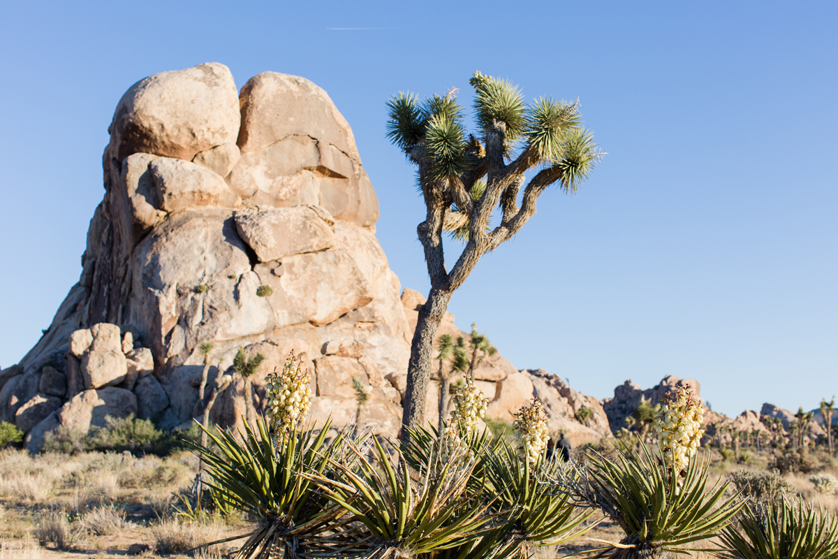 Joshua Tree National Park (photo credit: The Vondys) | Fresh American Style