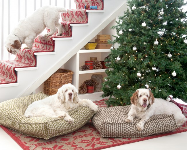 13Dash&AlbertChristmasDogs_HouseBeautiful_2