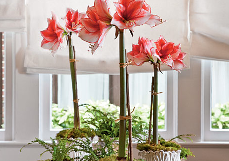 The Best Fall-Blooming Indoor Plants | Fresh American