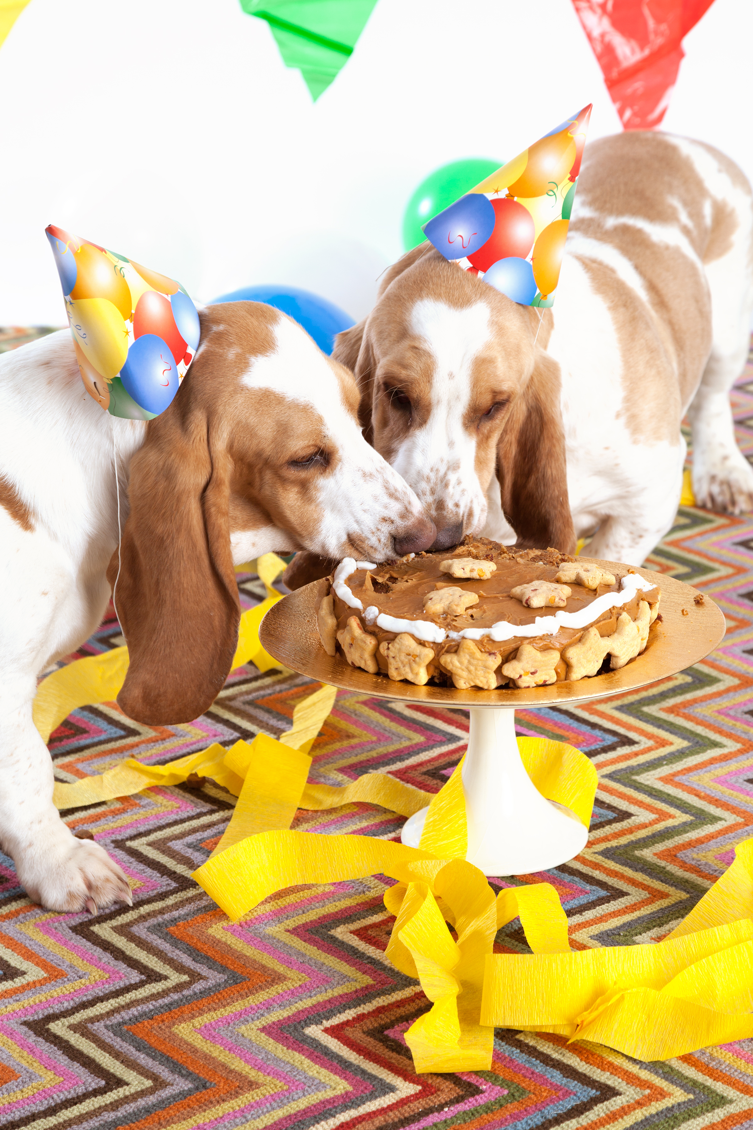 Peanut Butter Turkey Bacon Cake Recipe For Dogs