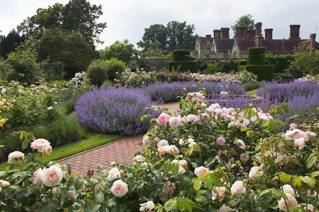 English garden roses Borde Hill Gardeen