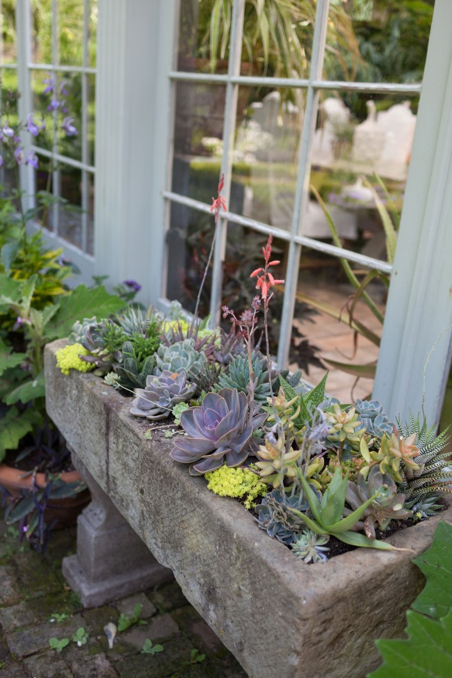 How to make a succulent container garden