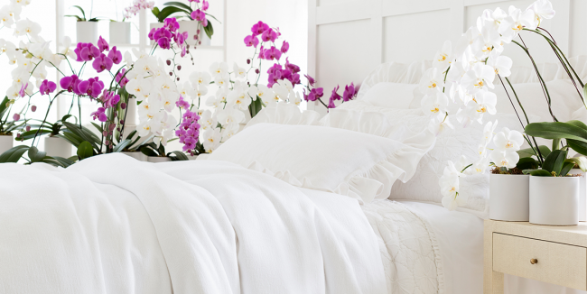 tropical decorations on bed tropical home decor ideas.htm 8 easy care indoor plants to brighten up your home this winter  indoor plants to brighten up