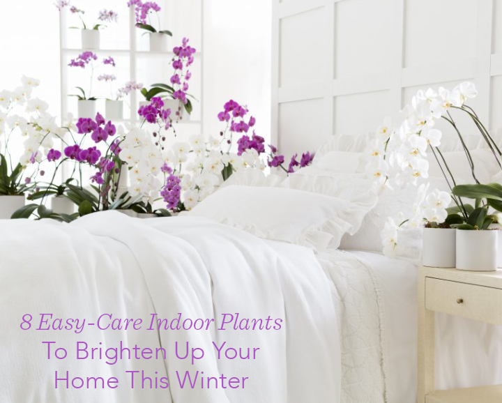 home decor ideas use tropical leaves.htm 8 easy care indoor plants to brighten up your home this winter  indoor plants to brighten up