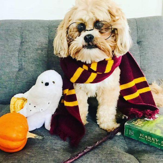Happy HOWL-o-ween: It's a PAW-TY! | Annie Selke's Fresh American Style
